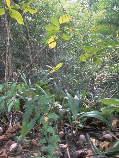Foliage Background 024