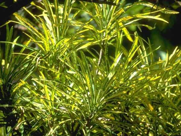 Foliage Background 064