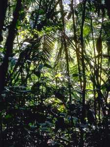 Foliage Background 065