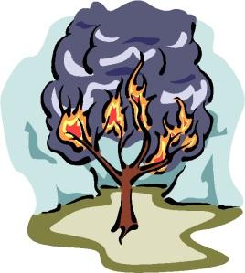 BURNING BUSH 5