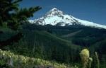 MOUNTAIN SCENE 003