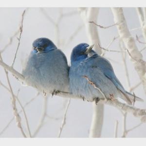 winter birds5243142371007901533..jpg