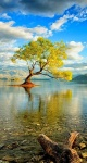 new zealand, south island lake wanaka _ modren villa1692493088210957693..jpg