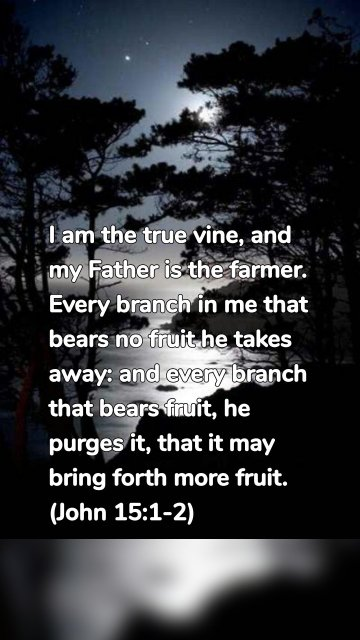 I am the true vine, and my Father is the farmer. Every branch in me that bears no fruit he takes away: and every branch that bears fruit, he purges it, that it may bring forth more fruit. (John 15:1-2)