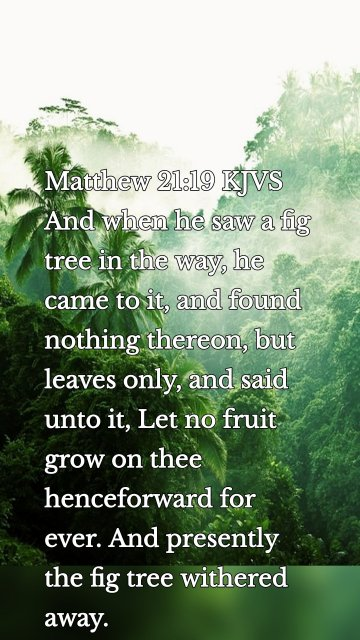 Matthew 21:19 KJVS And when he saw a fig tree in the way, he came to it, and found nothing thereon, but leaves only, and said unto it, Let no fruit grow on thee henceforward for ever. And presently the fig tree withered away.